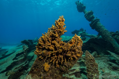 grand-cayman-harbour-wreck-of-the-balboa-new-growth_