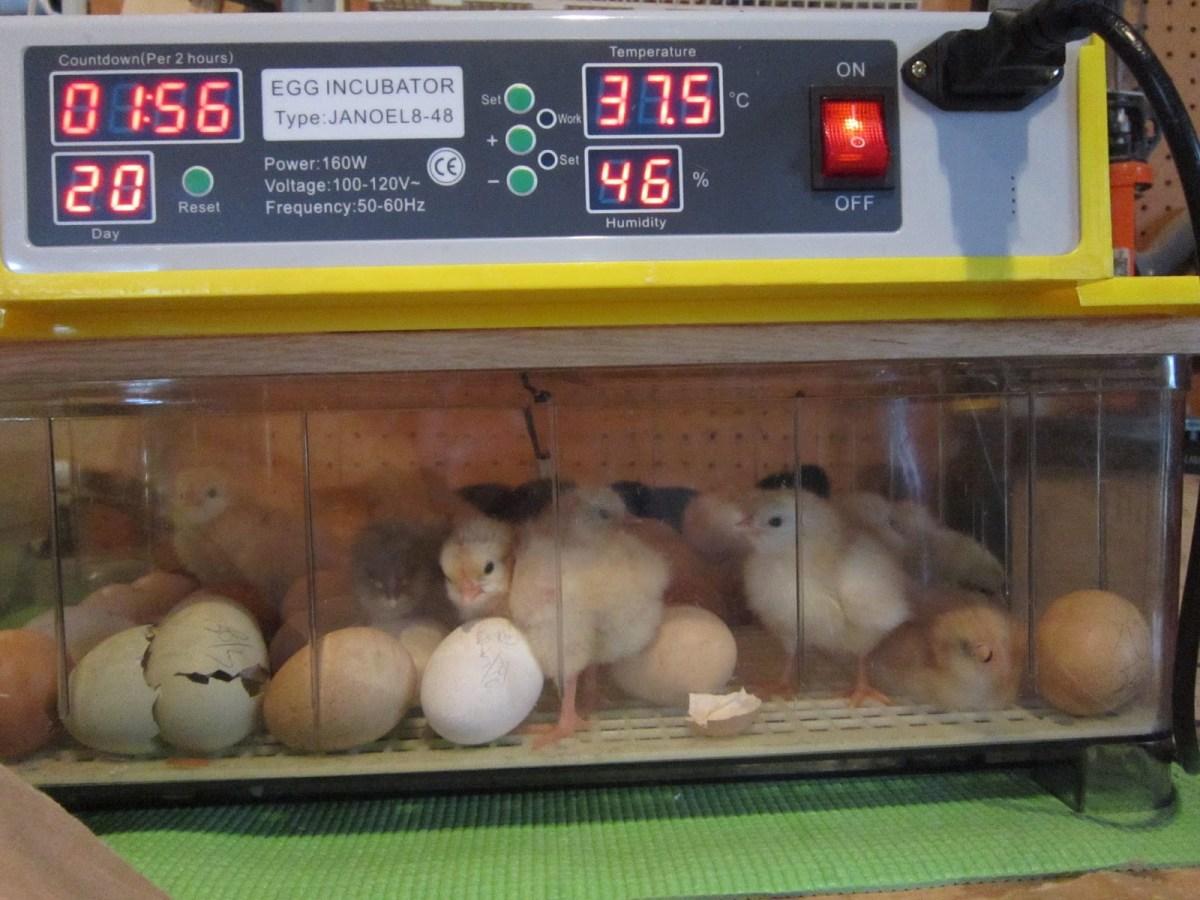 solar eggs incubators