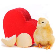 lg-dozen_chicks.jpg
