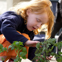 child with tomato plants