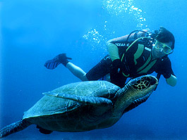 Contessa Green Cuisine is turtle safe