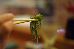 Seaweed, seaweed, seaweed!
