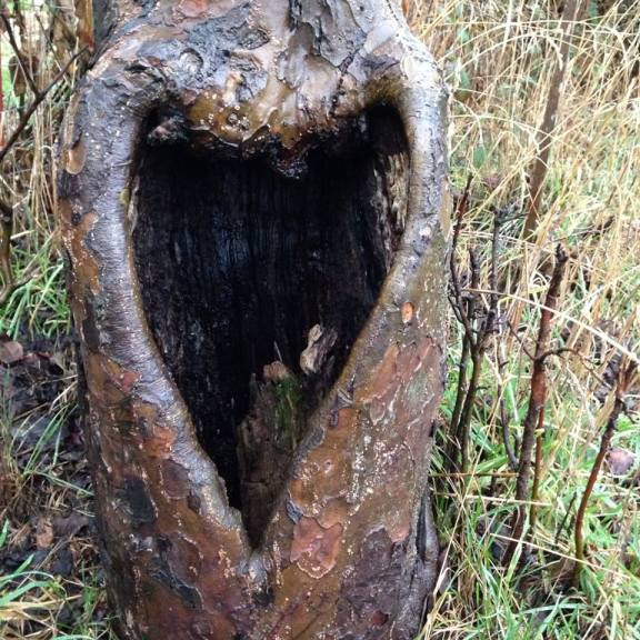 Heart openings in nature
