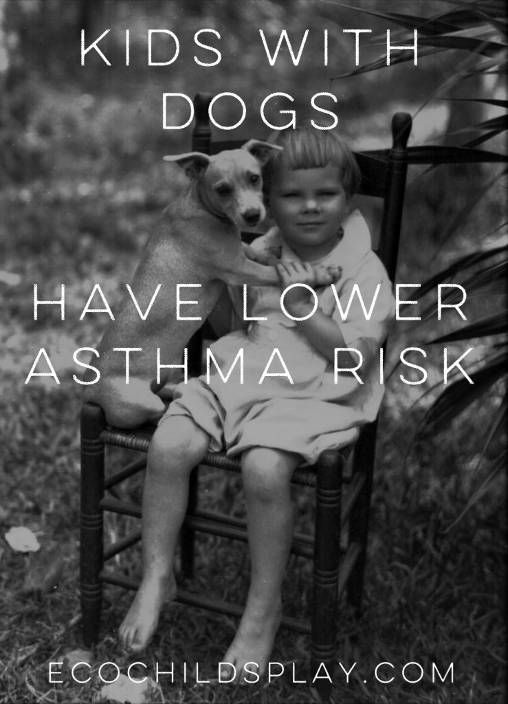 """Exposure to dogs (having a parent who was a registered dog owner) during the first year of life was linked to a 13% lower risk of asthma in school age children, and farm animal exposure was linked to a 52% lower risk for school age children and a 31% lower risk among preschool age kids."""
