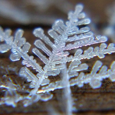 Eco Literature:  Snowflake River