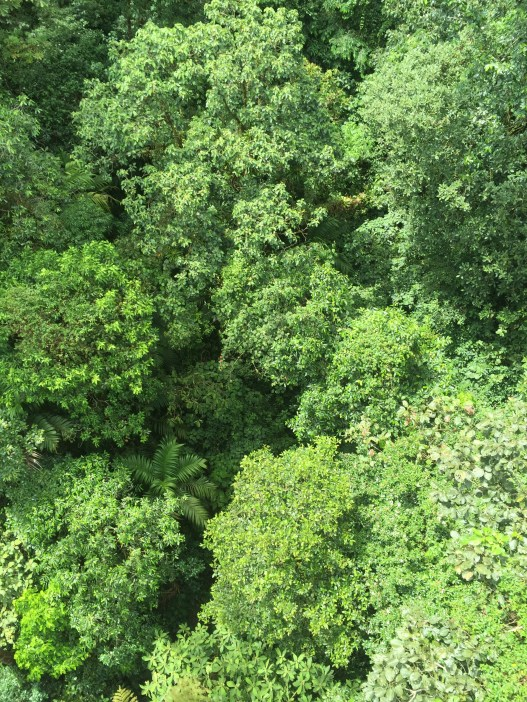 View from the tree tops