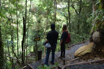 Guide explaining the cloudforest