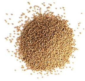 semillas de mostaza como consumirlas