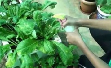 aceite de neem insecticida