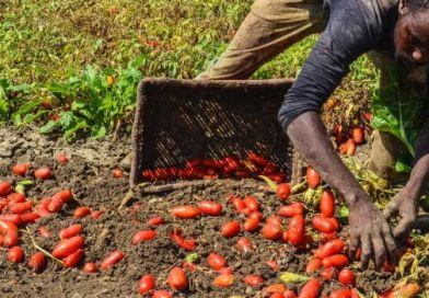 Caporalato: pubblicato l'Avviso per la lotta allo sfruttamento lavorativo in agricoltura