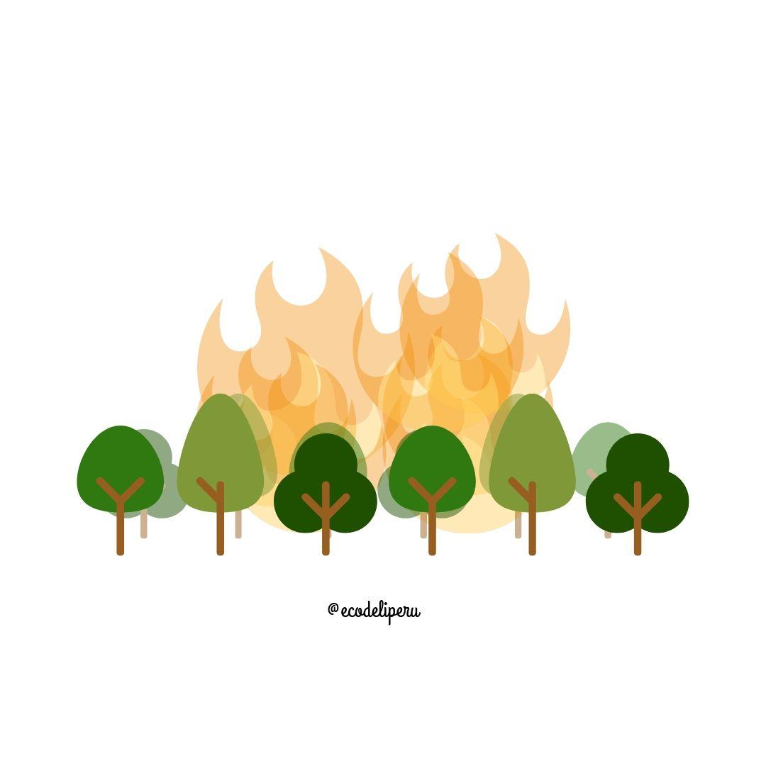Incendio en la Amazonía y lo que puedes hacer a respecto