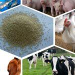 إضافات الأعلاف للحيوانات الزراعية - ما هو وتصنيفها