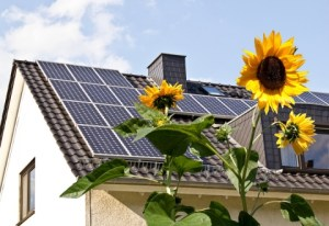 blogphoto-Solar-cells-on-a-roof-with-sun-flowers