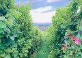 Wino bez śladu węglowego