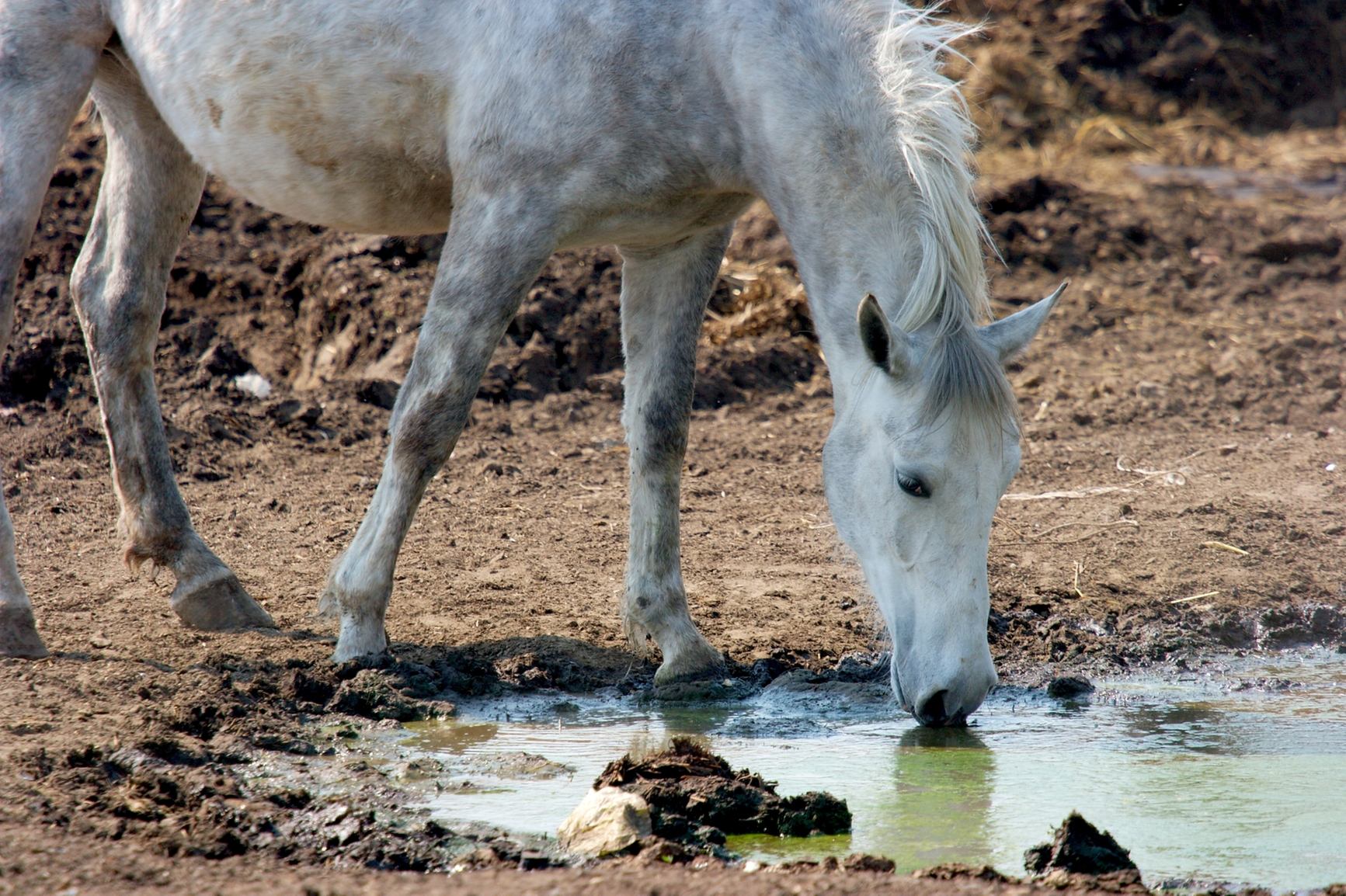 Mud And Your Horse Farm