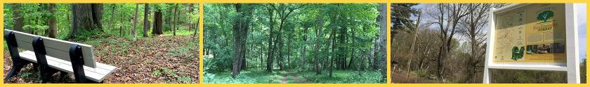 EcoEternity_Forest_Highroad
