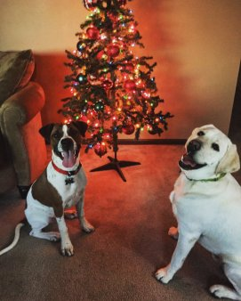 My two favorite boys, Cooper and Cash in front of our Charlie Brown Christmas Tree