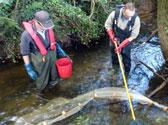 lamprey-electrofishing