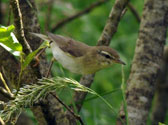 Breedfing-Bird-Surveys