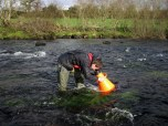 Freshwater Pearl Mussel Survey