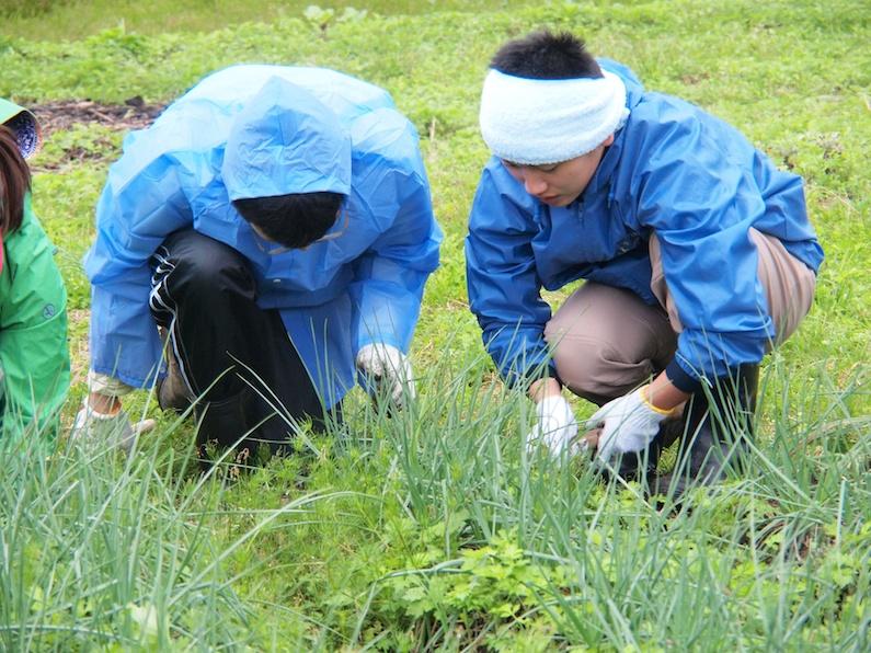 トカラ列島中之島での農業ボランティアの風景