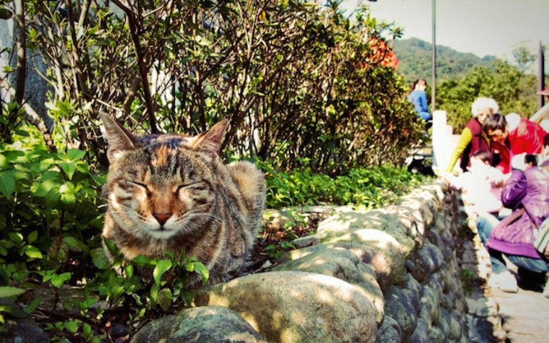 村じゅうに猫100匹!台湾の猫村「猴硐(ホウトン)」に行こう!