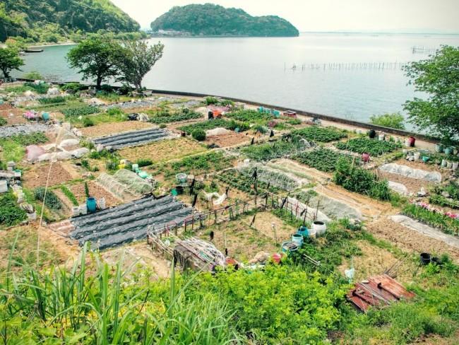 沖島の千円畑
