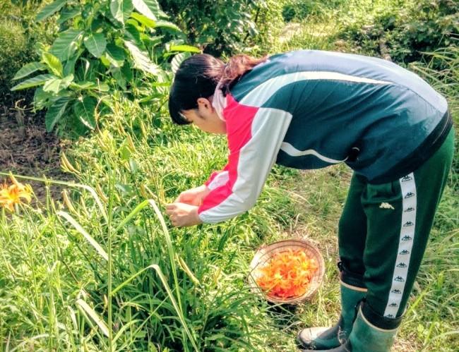 自然農法を実践する台湾の農家で農業ボランティアをする学生参加者