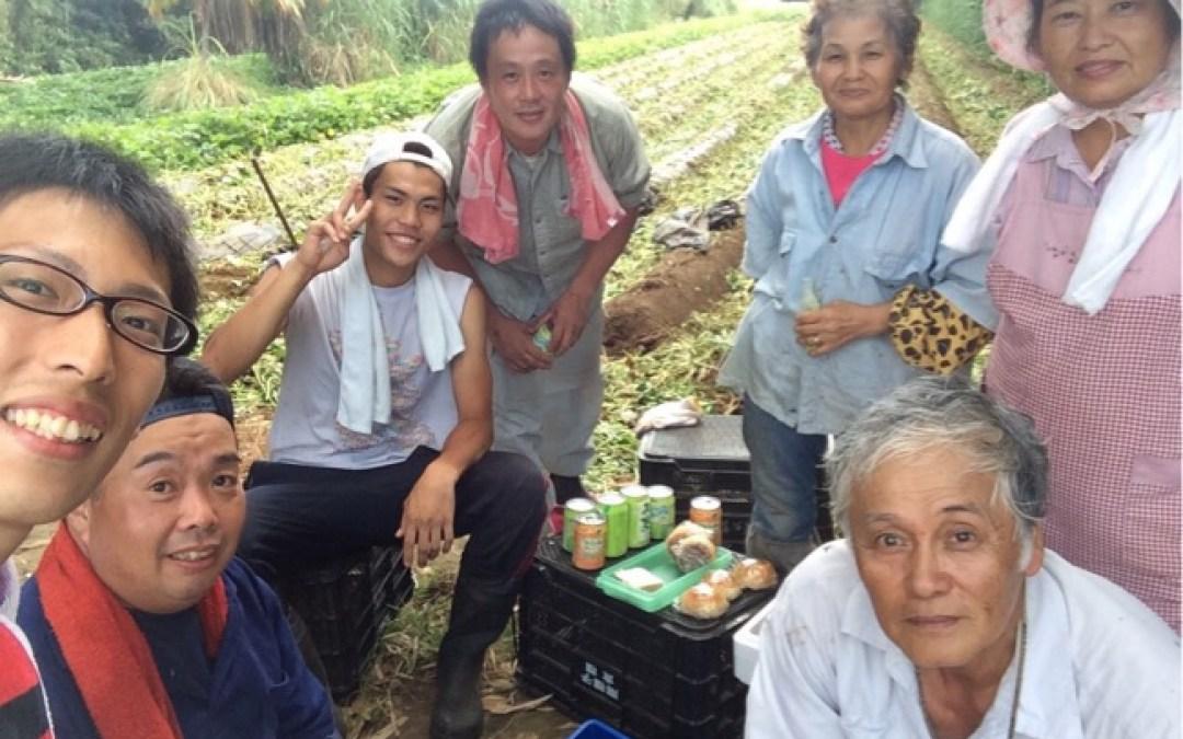 種子島名物、安納芋の収穫!
