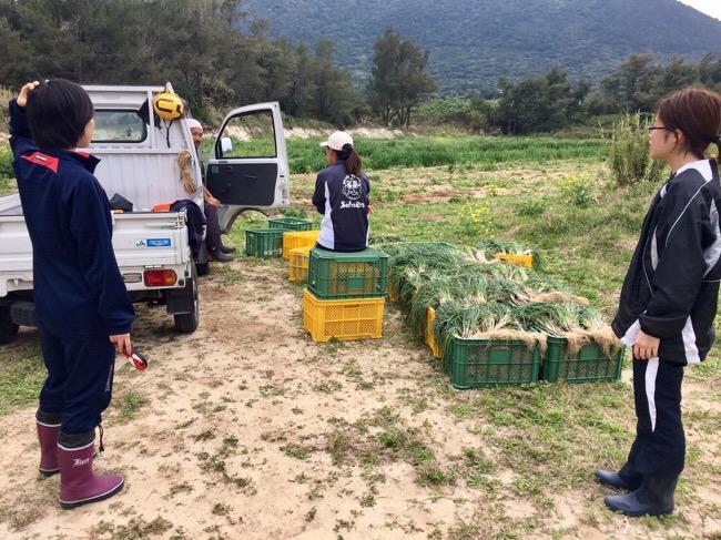 初めての農作業、らっきょうの収穫!