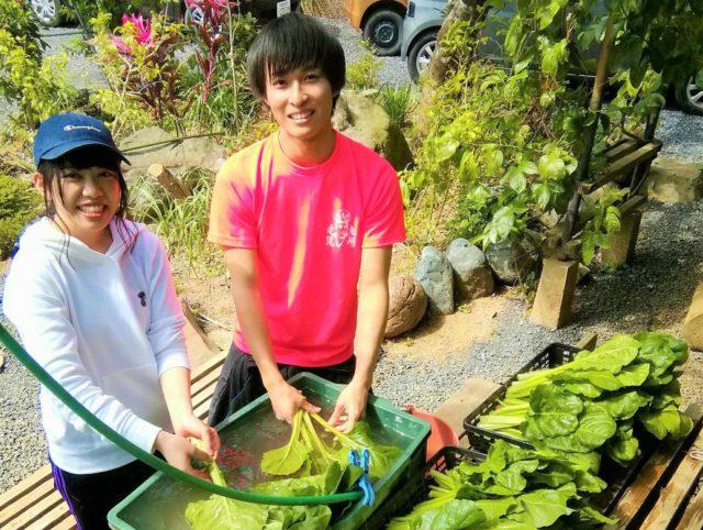 有機農業のお手伝い