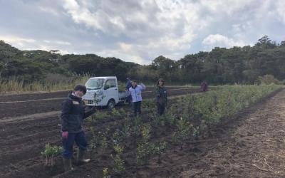 本格的な農業ボランティア開始!