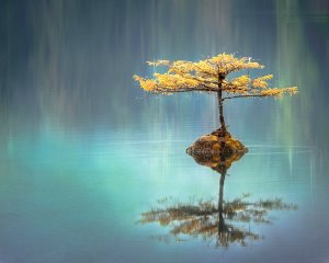 A tree growing near a peaceful lake