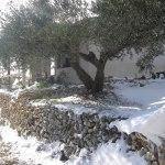 La sevillenca nevada