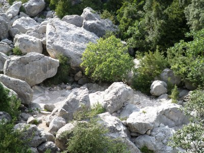 Higuera en Vall Figuera