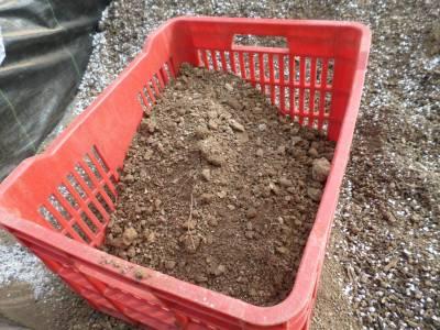 caja de fruta para tamizar la tierra