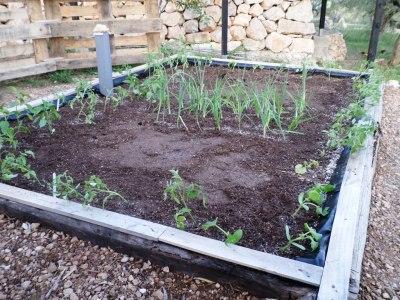 plantones recién plantados