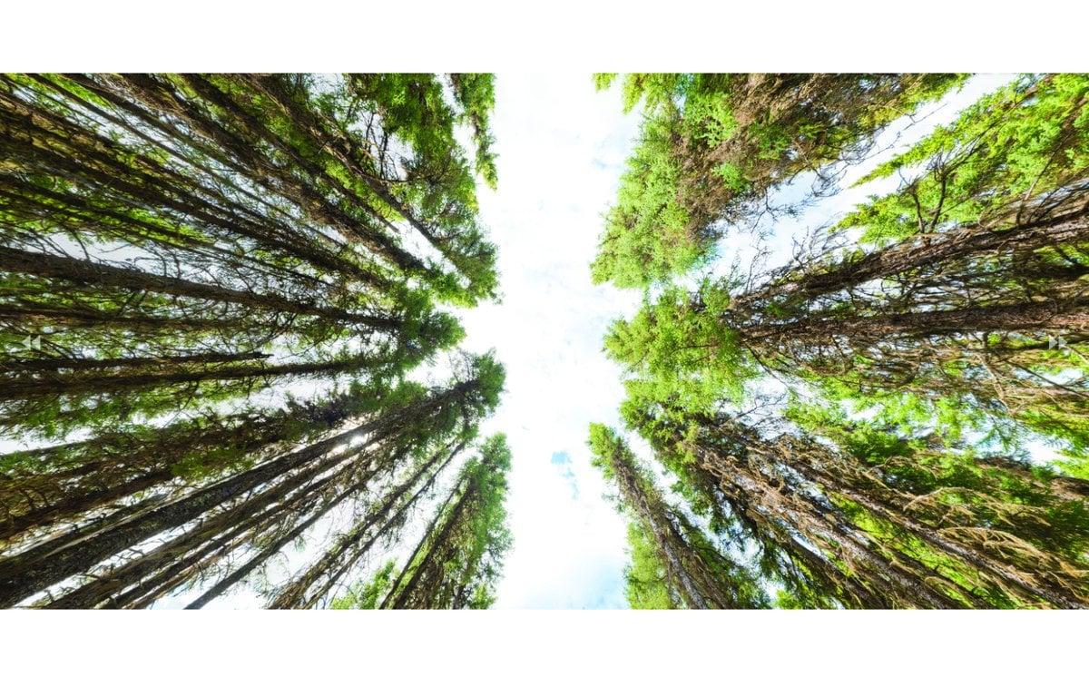 Experimental silvicultural treatments