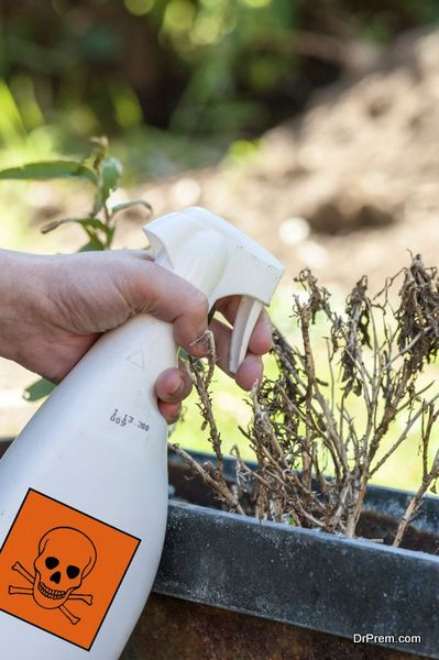 woman's hands spraying plants