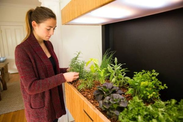 Smart Indoor Garden Grove 1