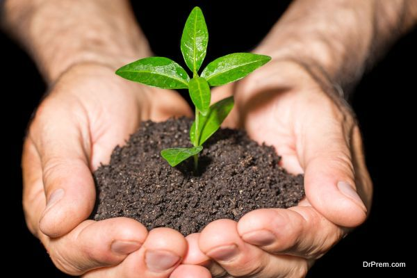 Choose the Right Soil
