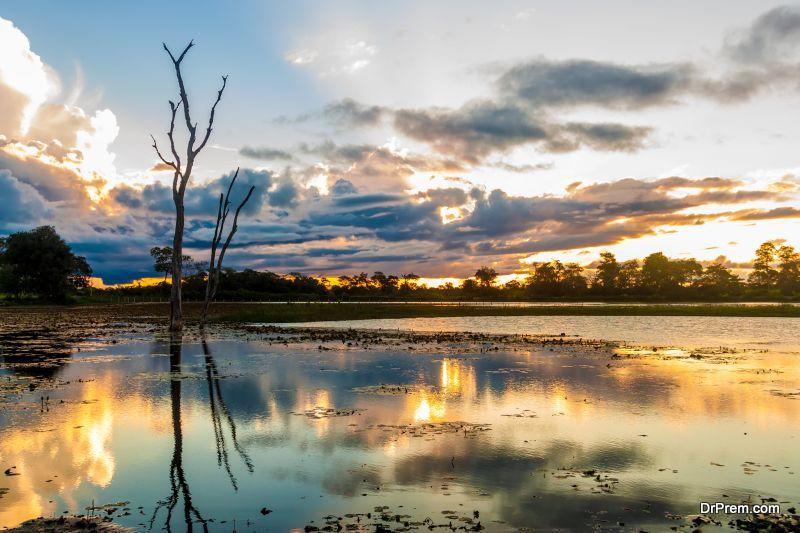 wetlands-influence-the-environment