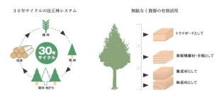 30 year wood cycle