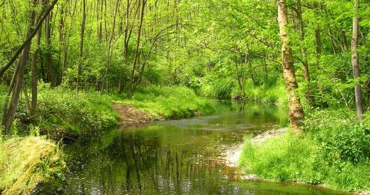 30 marzo – 6 aprile/ Giornata del verde pulito nel Parco del Lura