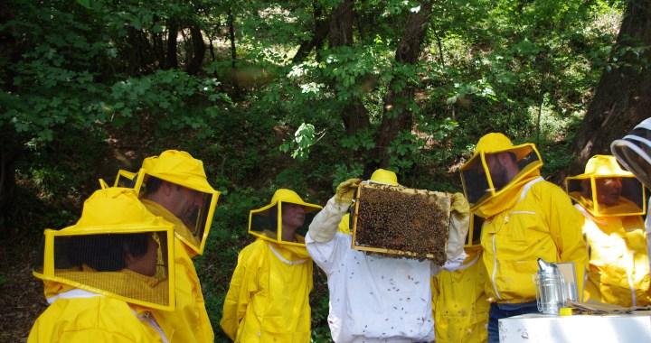 Corso per apicoltori: quante adesioni!