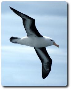 Associazione Albatros/ Libri per viaggiare da casa