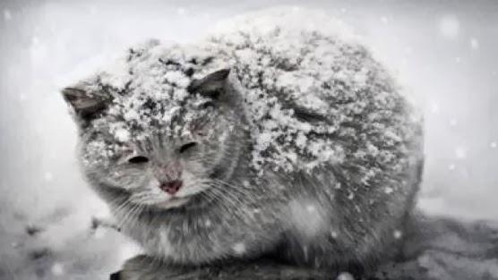 Luigi Nessi/ Di freddo si muore