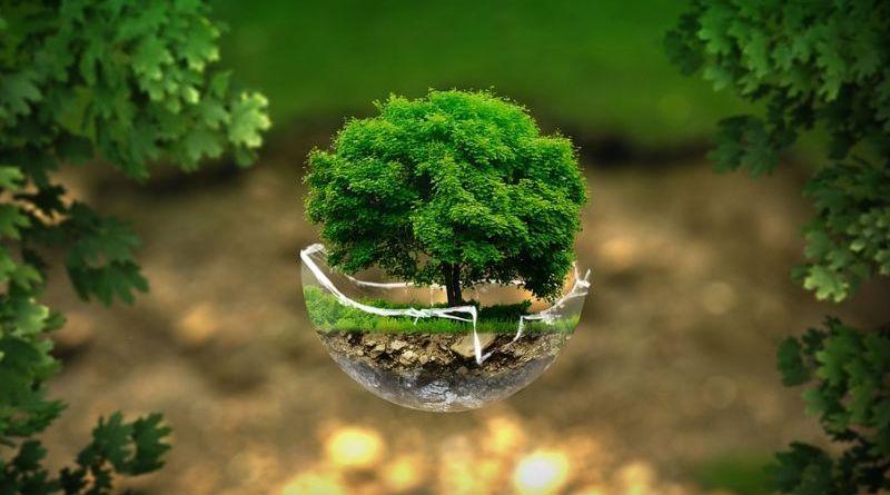 Giornata Mondiale per l'Ambiente 2020: «è il momento per la natura» |