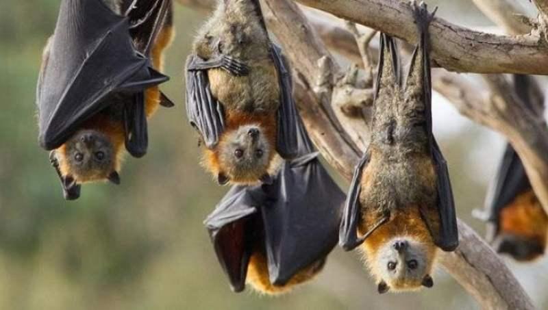 L'infinito errore libro pipistrelli