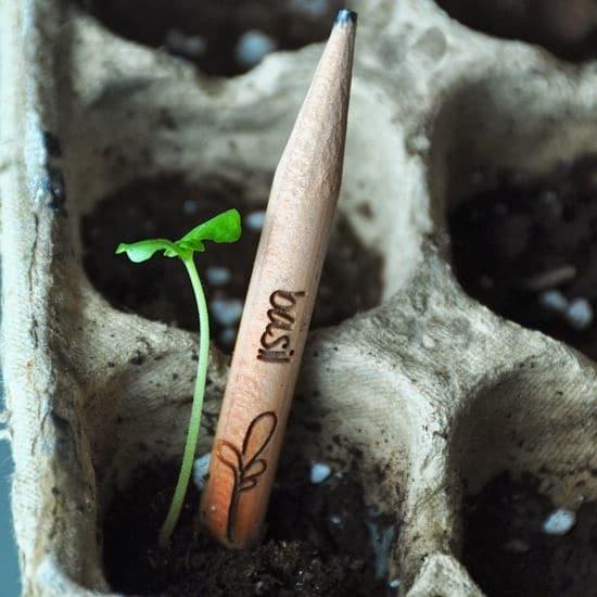sprout-nuevo-lapiz-contiene-semilla-se-convierte-en-planta-arbol